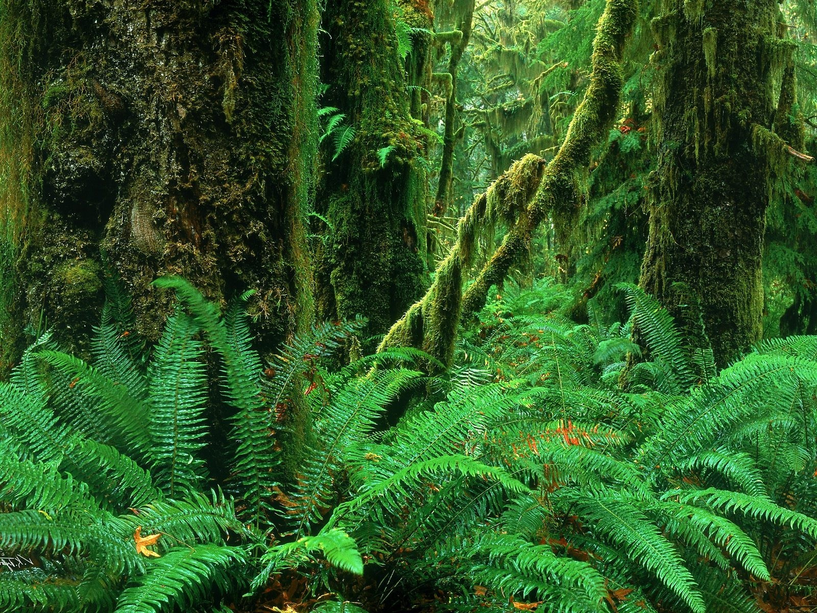 Jungle Computers Desktop PPT Backgrounds