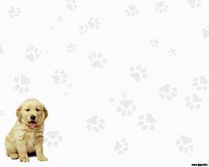 download free labrador retriever plantillas powerpoint gratis