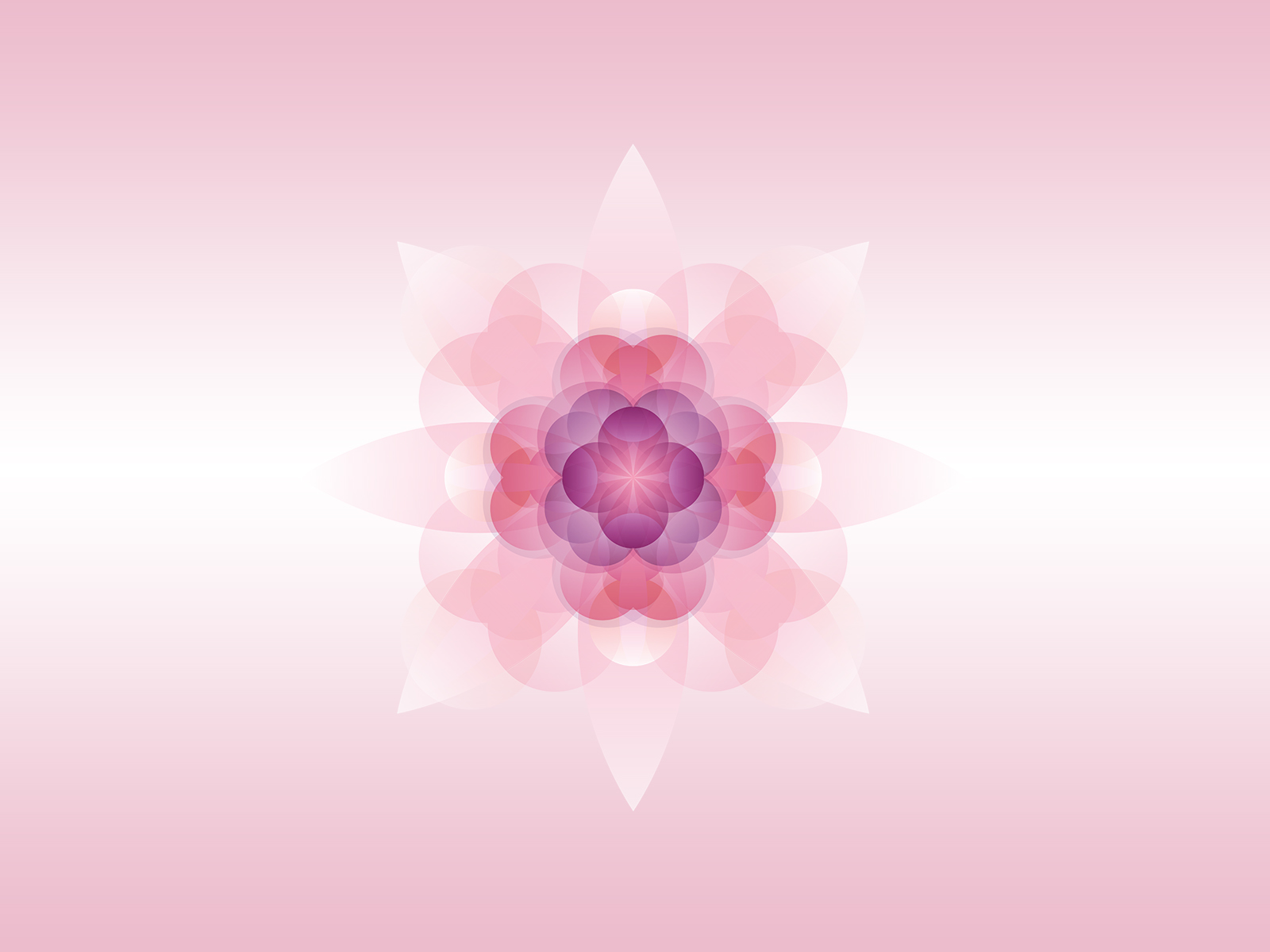 Download Free Pink Flowers Flowers Pink Presentation Ppt Backgrounds