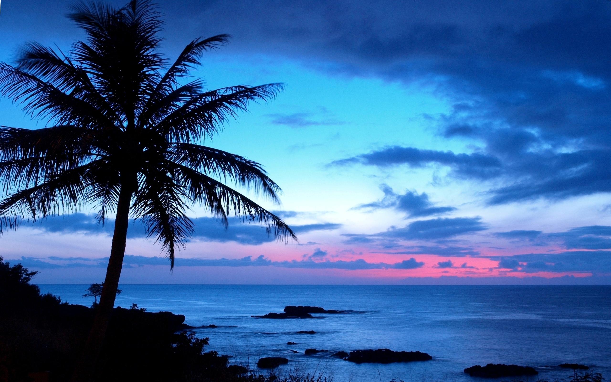 Tree Hd Hawaii Wallpaper Backgrounds